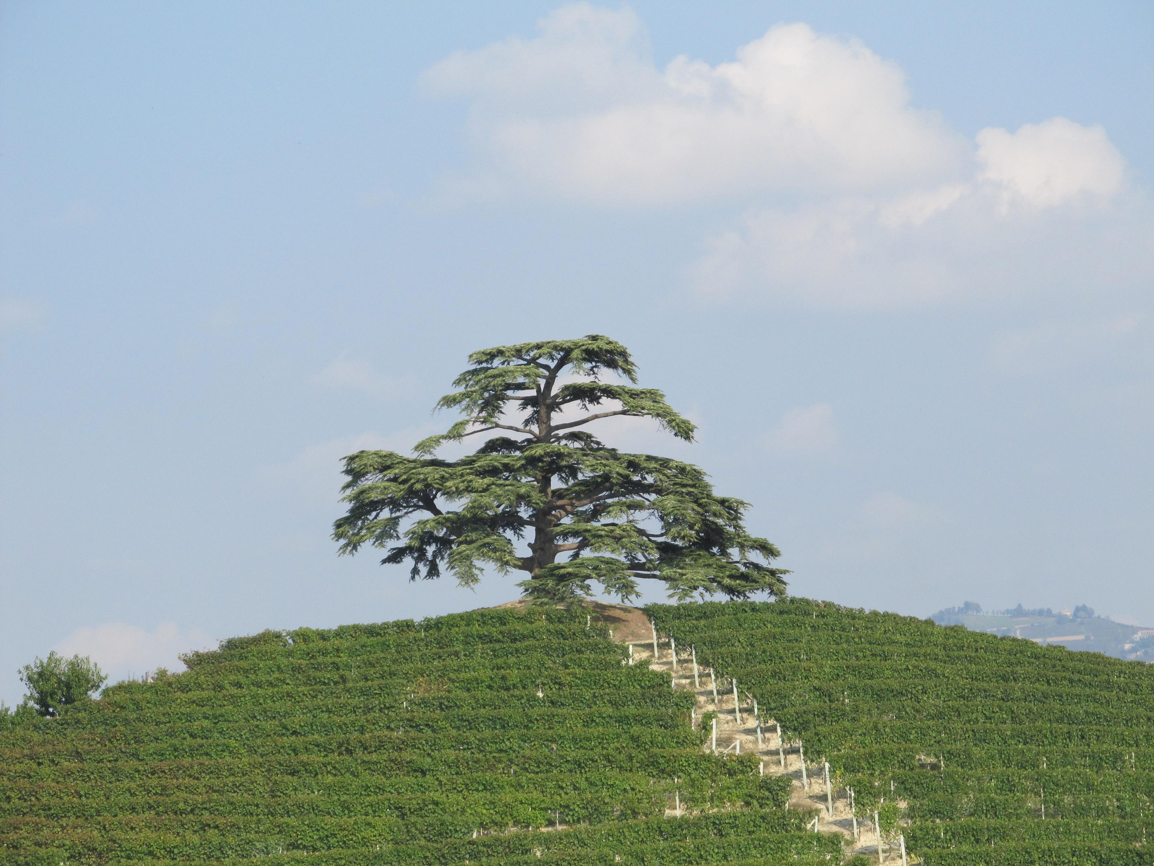 Italiensk Vinresa - Barolo, Barbaresco & Amarone